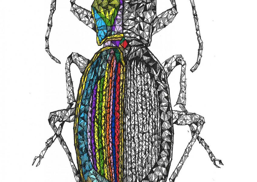 asare-adjei_earth-is-home_beetle_001_final